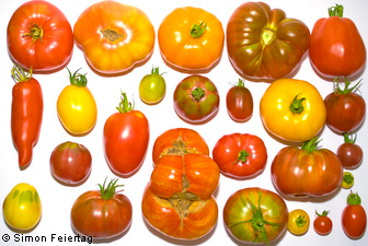 Tomatoes - information and photos about many different tomatoe varieties